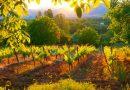 Прилепското виногорје и традиционалното винарење