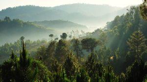 Само 3% од светските екосистеми остануваат недопрени од човекот