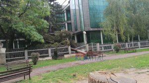 Урнати дрвја во Прилеп поради силното невреме